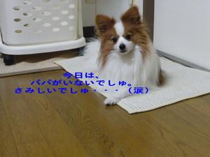 Imgp4761_2